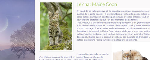 blog_chat-mainecoon